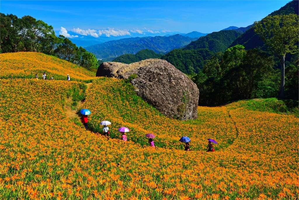 赤柯山。金針未開的空靈美|壯觀的千噸石龜奇景