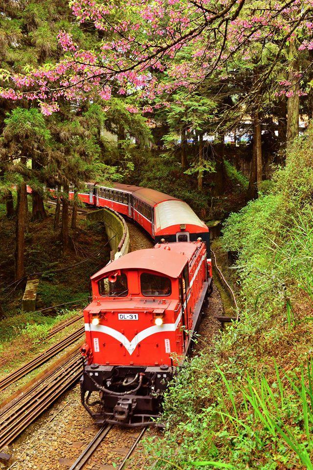 2020阿里山櫻花季。賞櫻景點6選|交通。訂房優惠。行程推薦