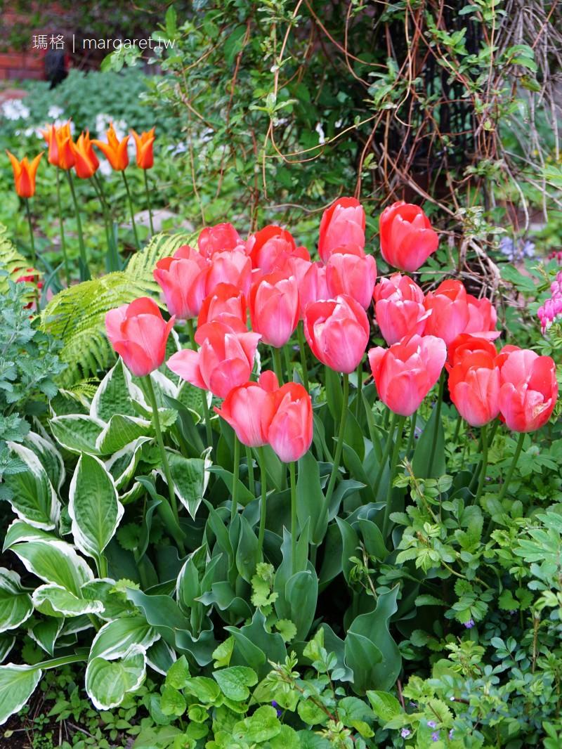 五月是清里最美的季節。山梨縣Orchard House清里民宿|鮮花鋪滿我們的旅途