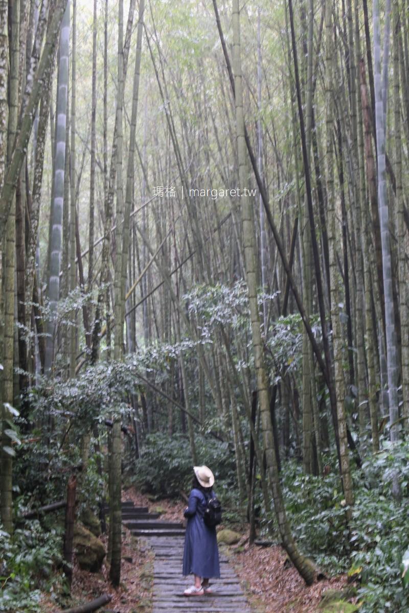 迷糊步道。阿里山賞櫻景點|樂野部落米洋溪步道。幽靜美麗的竹林