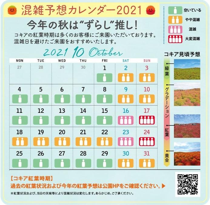掃帚草嘉年華2021。東京近郊紅葉景點 茨城常陸海濱公園