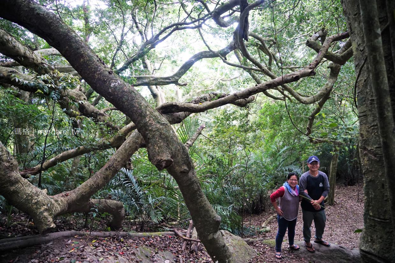 會走路的樹。台東秘境 鸞山部落森林殿堂奇景