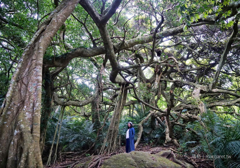 最新推播訊息:🌳台東鸞山部落奇景|會走路的樹?怎麼走?