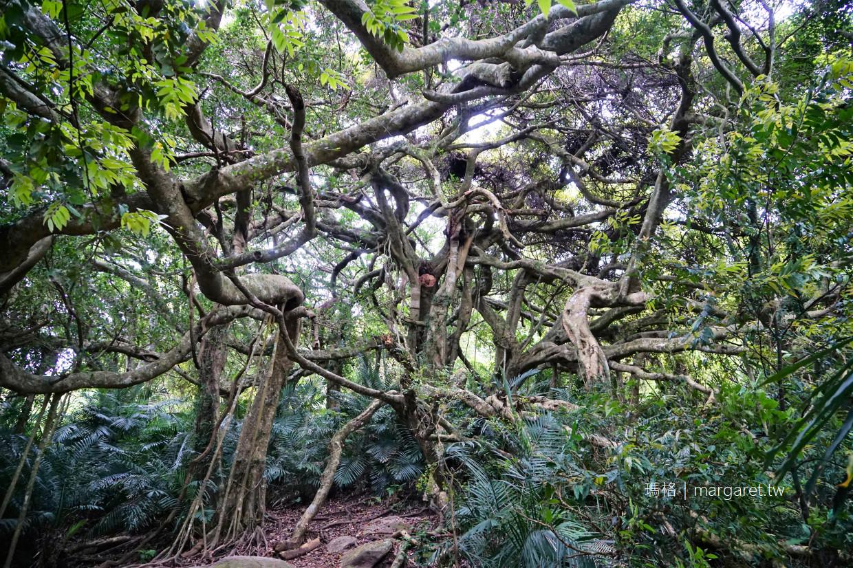 會走路的樹。台東秘境|鸞山部落森林殿堂奇景