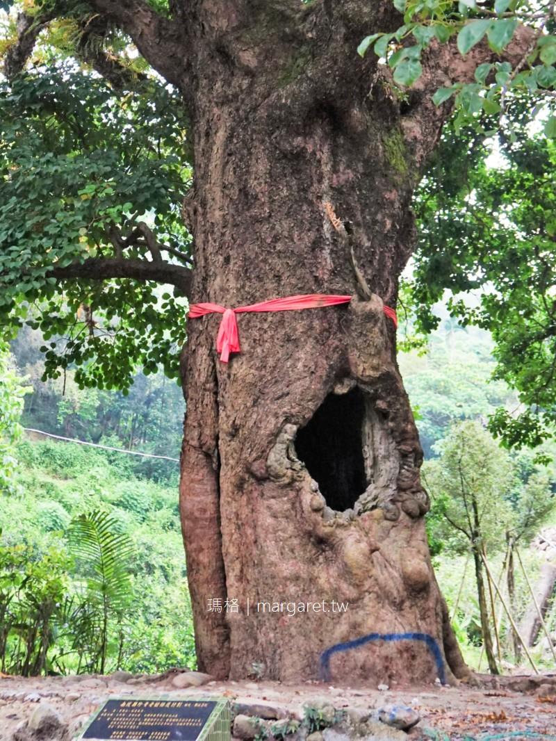 茄苳神木奇景。樹洞裡的台灣|南投國姓鄉台21線私房景點
