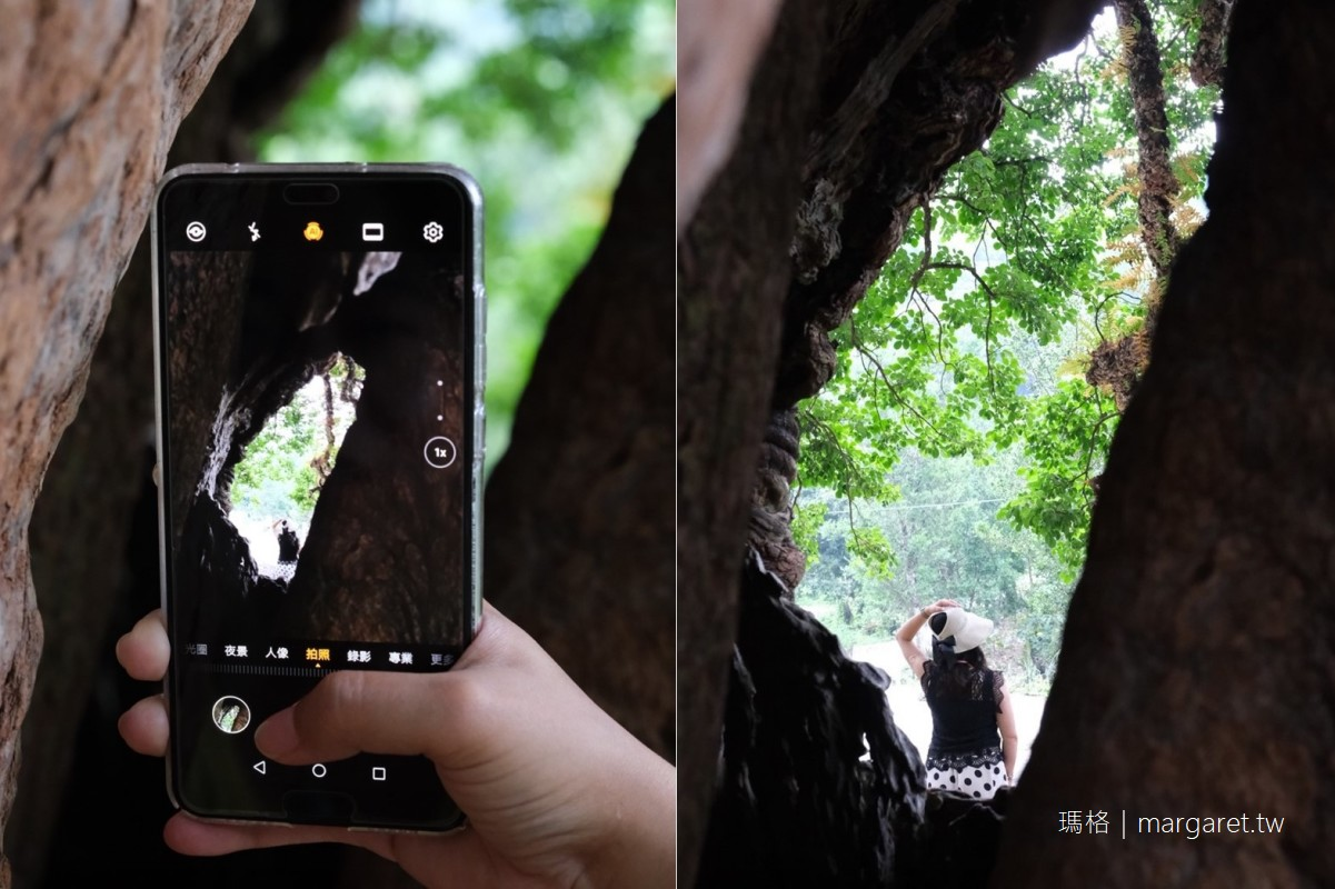 最新推播訊息:300年神木樹洞驚見寶島台灣|南投國姓鄉奇景