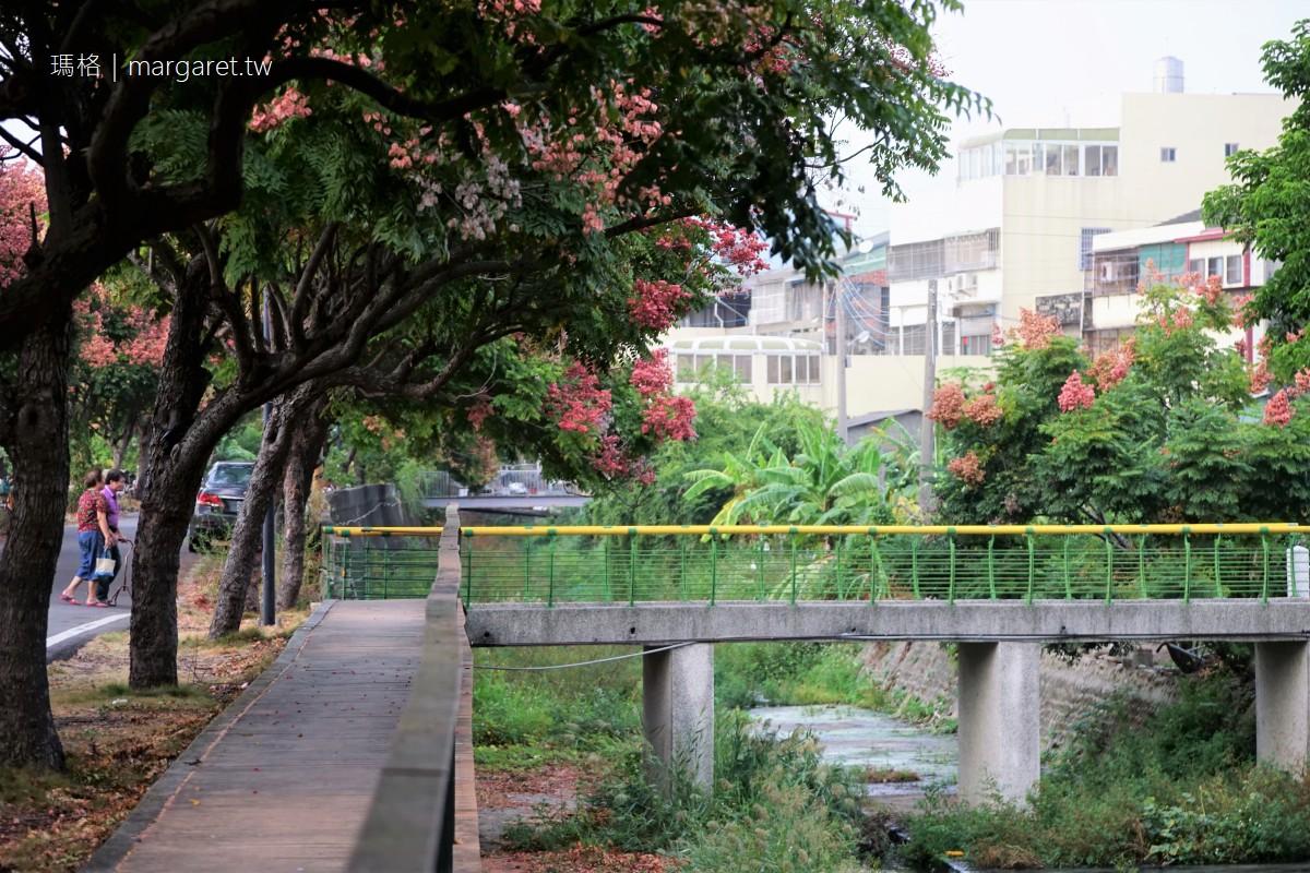 龍井欒樹隧道小秘徑。紅了|沿著龍井區公所大排漫遊