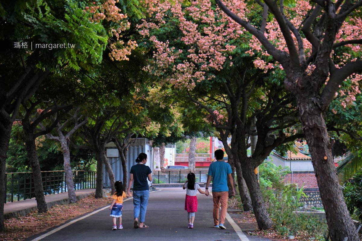 最新推播訊息:台中欒樹隧道,幽靜小秘徑。秋天樹梢紅綠黃繽紛美麗