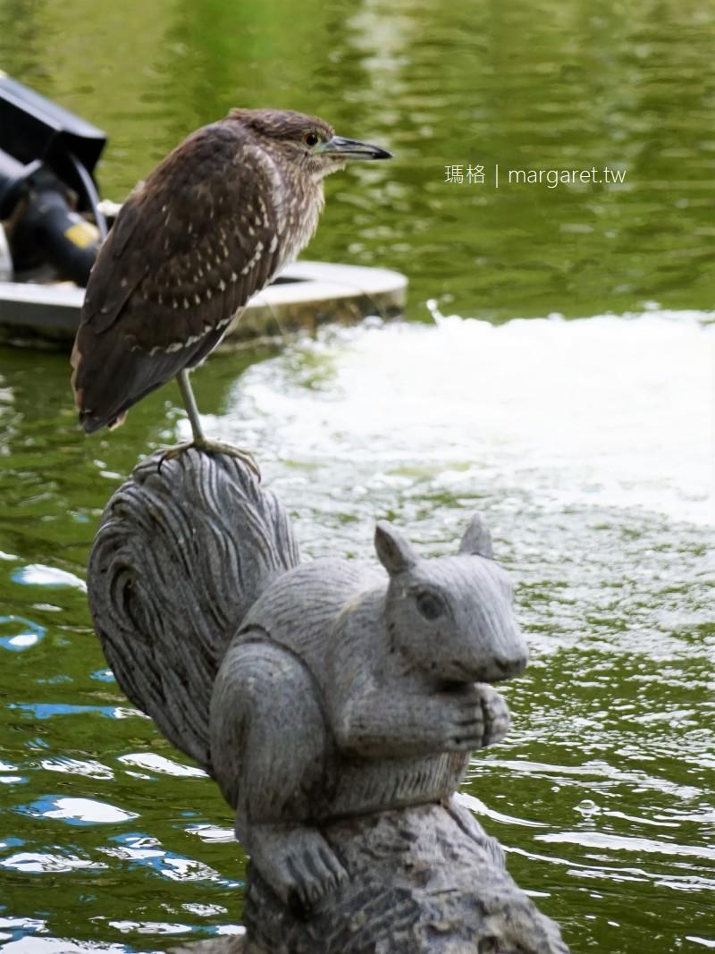 中正紀念公園梅花開了。大忠門旁梅園|花木扶疏的台北一隅 #隊長遊記