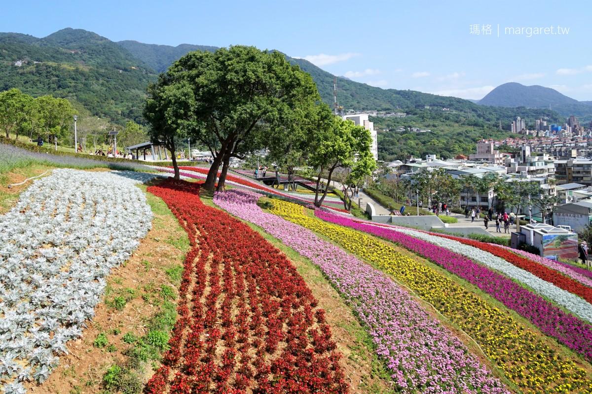 北投社三層崎公園彩虹花毯。花期至2月底|北市府打造迷你富良野花海  #隊長遊記
