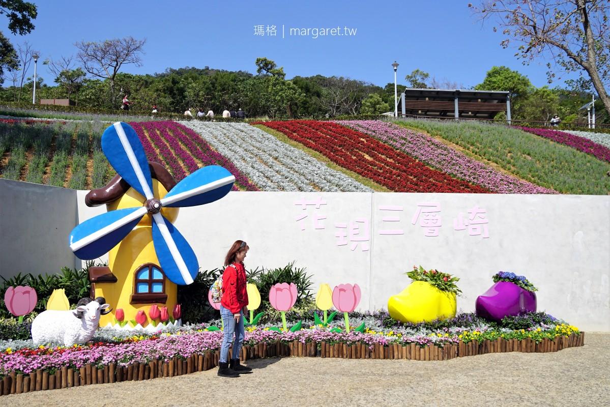 北投社三層崎公園彩虹花毯。花期至2月底 北市府打造迷你富良野花海  #隊長遊記