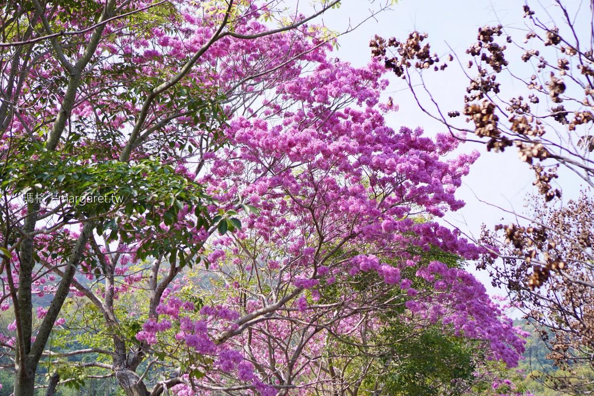 南投鹿谷風鈴木景點。清水溝溪生態步道|紫花開完黃花開