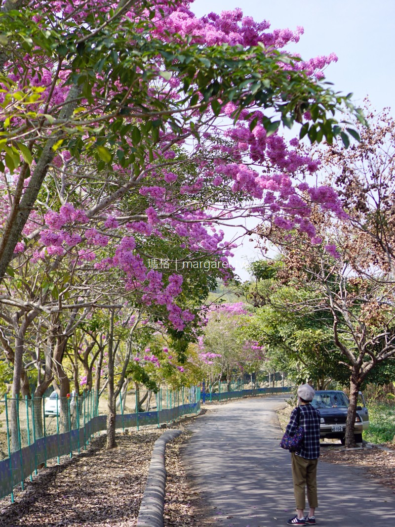 南投鹿谷風鈴木景點。清水溝溪生態步道 紫花開完黃花開