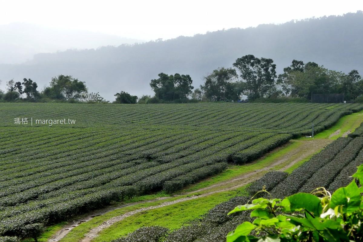 鹿鳴藝術茶園。茶香遠足|台東鹿野名產紅烏龍