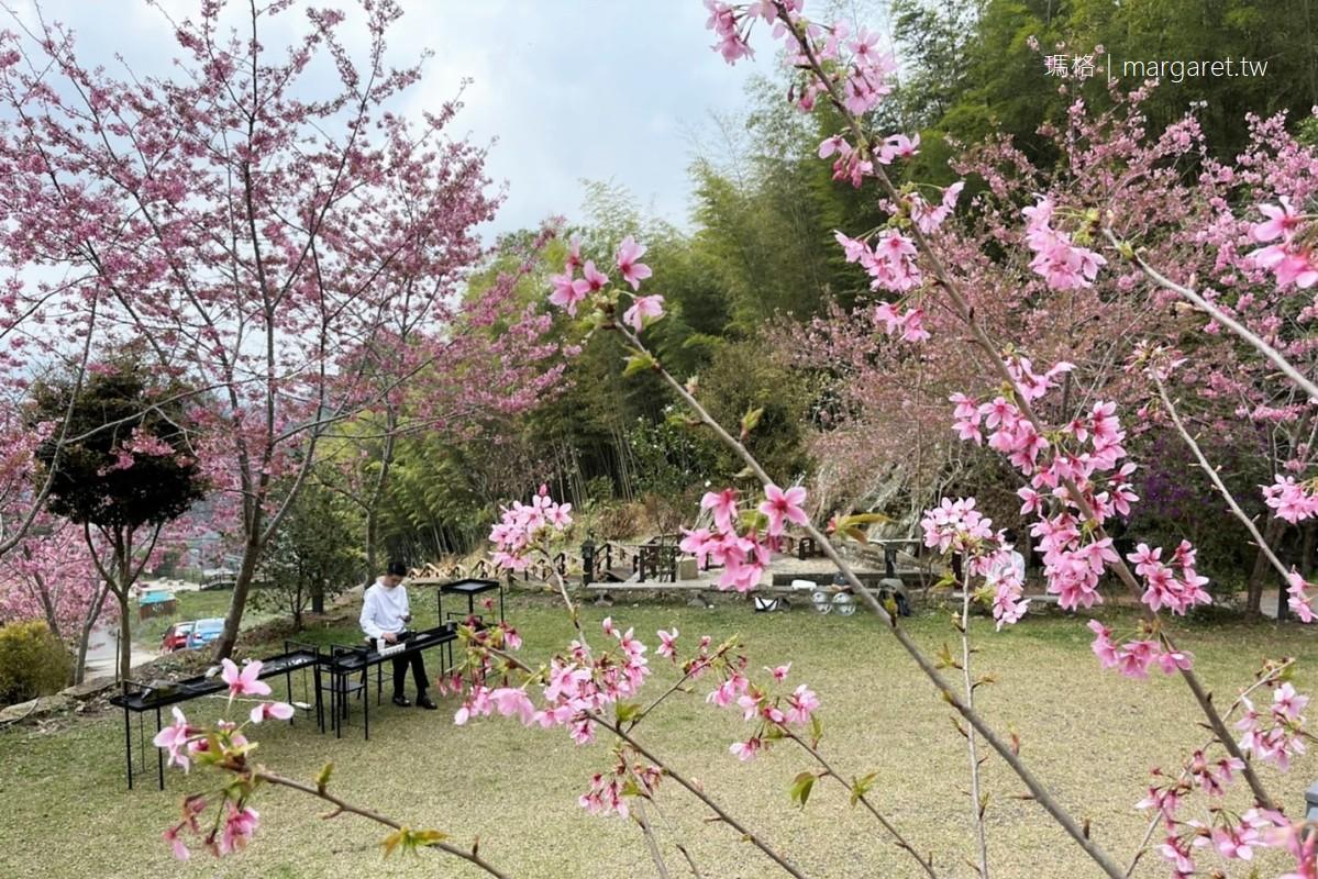 櫻之道。石棹步道櫻花樹下的茶席|阿里山公路旁私人櫻花林 (2021.3.8更新)