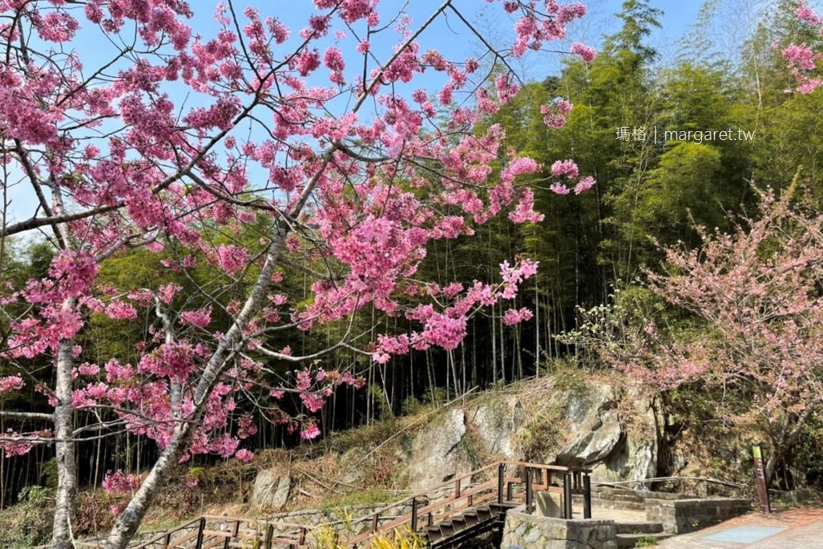 最新推播訊息:🌸櫻花樹下茶席好浪漫,阿里山石棹櫻之道開好開滿花況