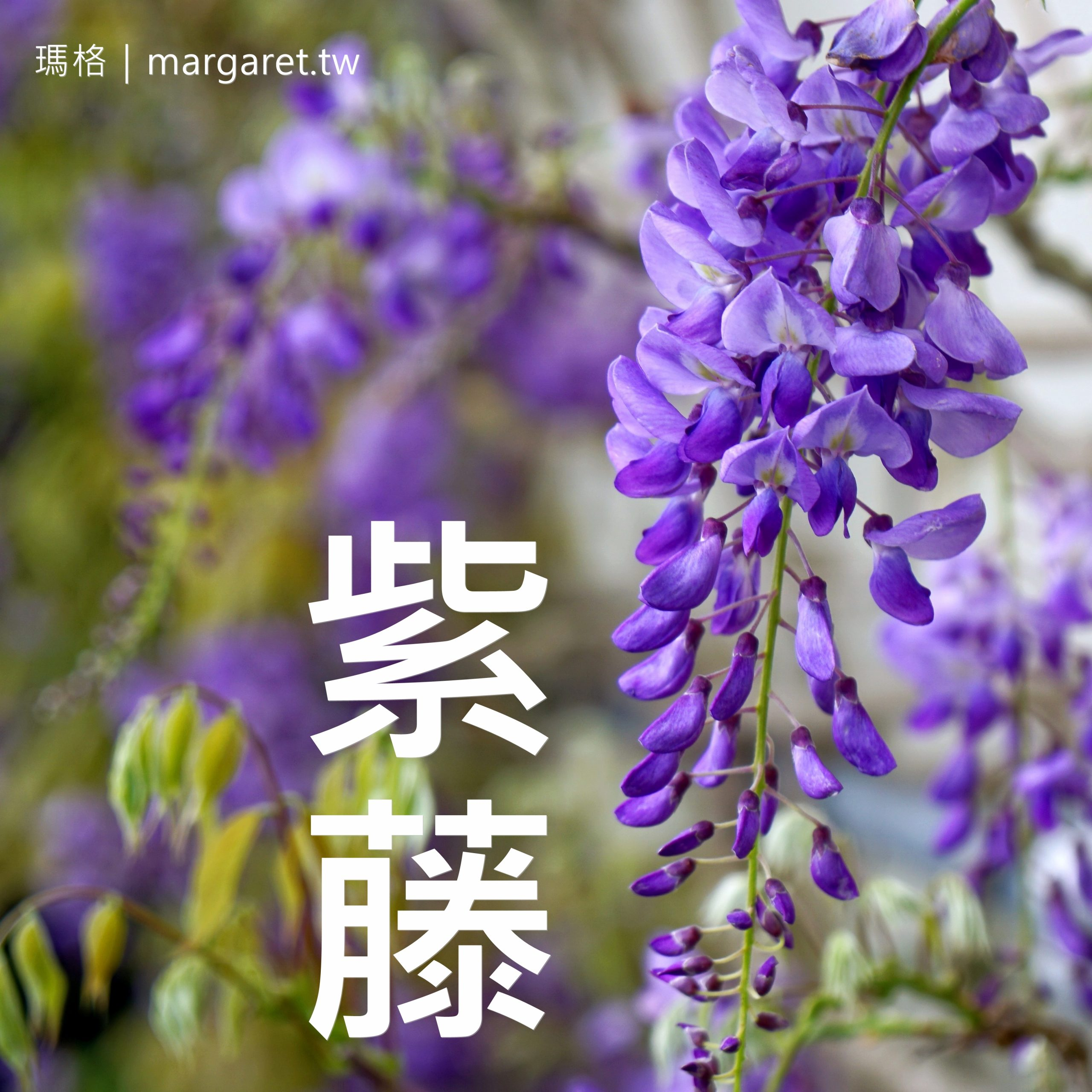 台北賞花景點。四時花曆|花況情報持續更新