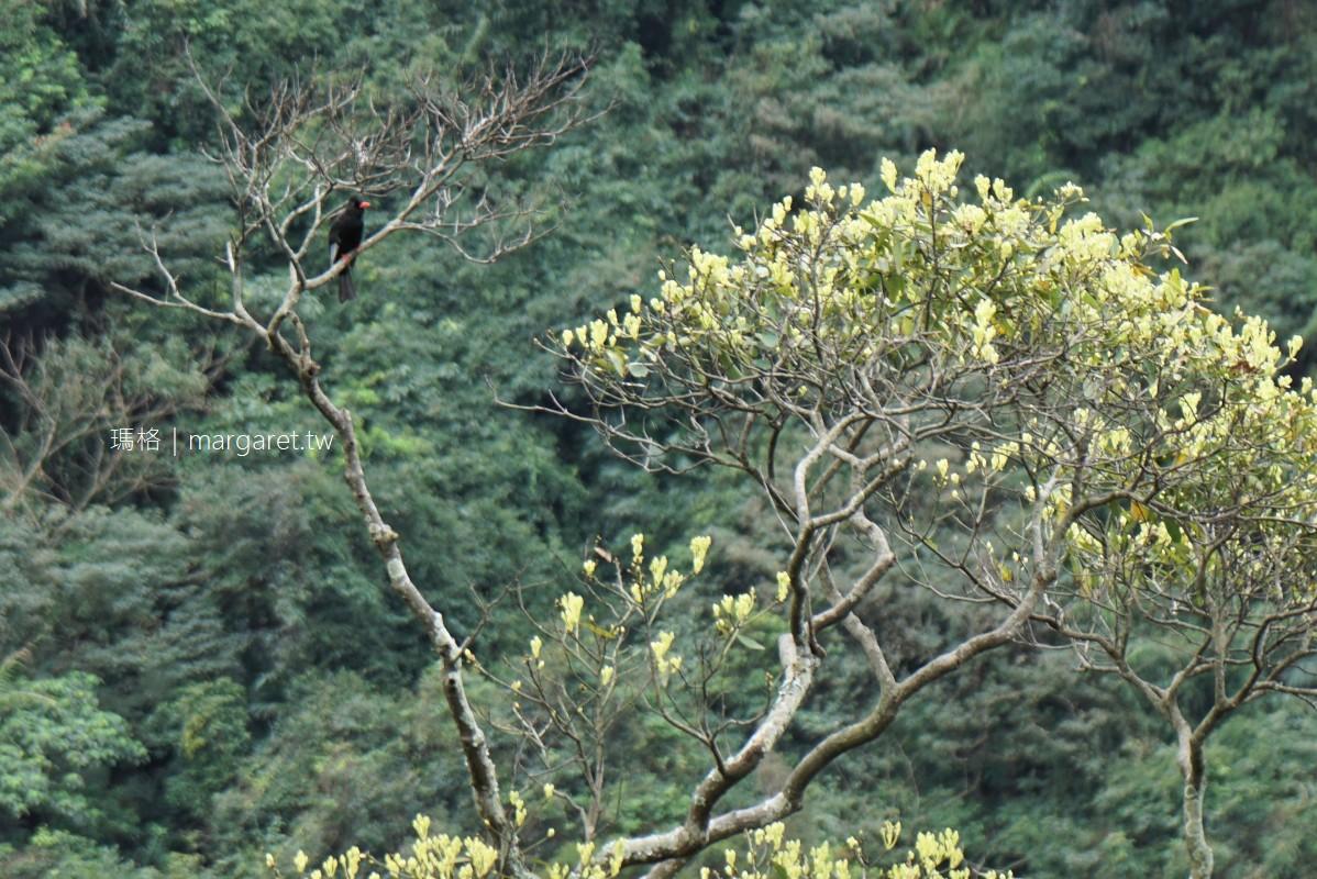圓覺瀑布。壯觀的巨石陣溪谷|走圓覺寺步道挑戰內湖三尖之一。可遠眺101