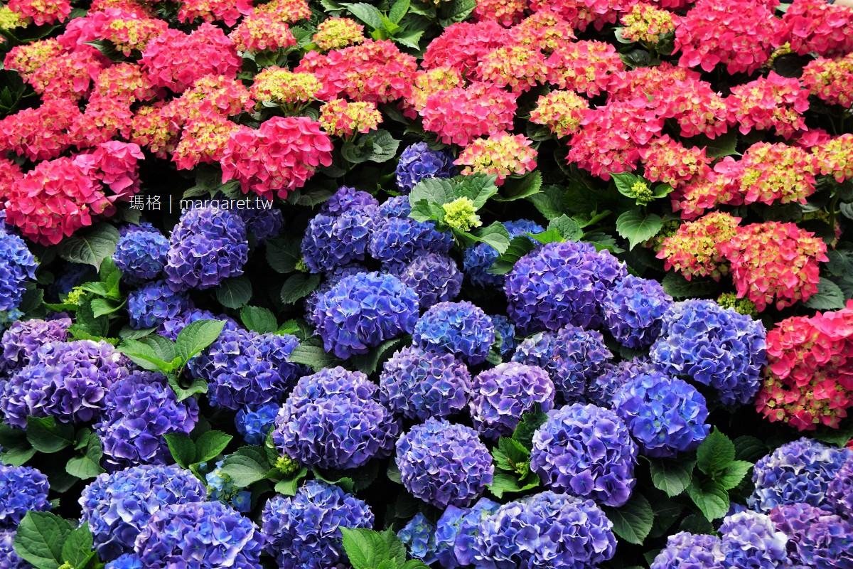 最新推播訊息:嬌美繡球花不用上陽明山拍,大安森林公園就有一大片