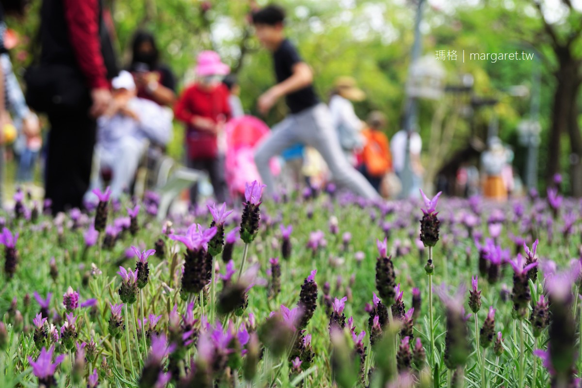 2021台北杜鵑花季。繡球花最討喜|大安森林公園杜鵑冶園賞花