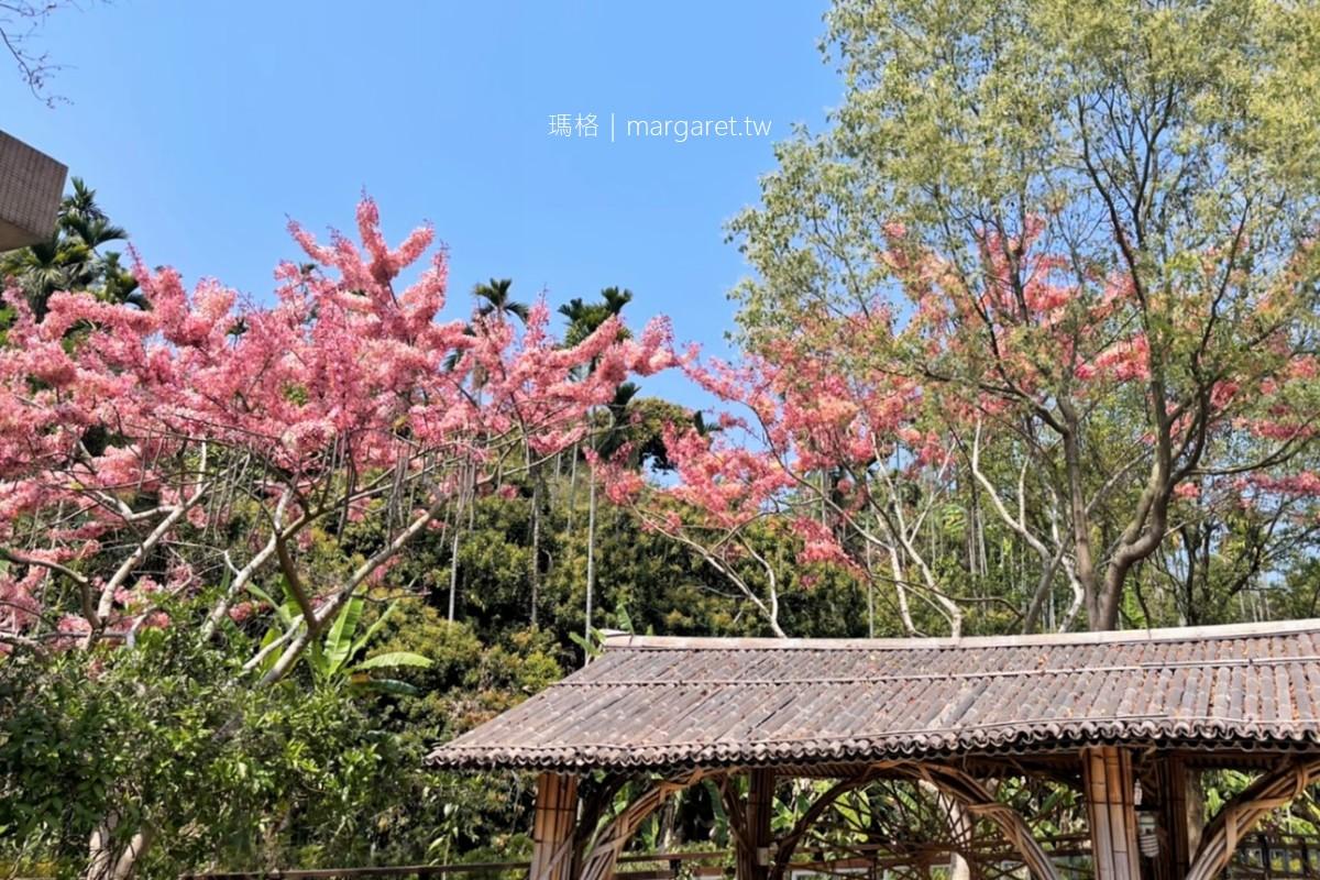 文峰遊客中心。花旗木開了|阿里山國家風景區