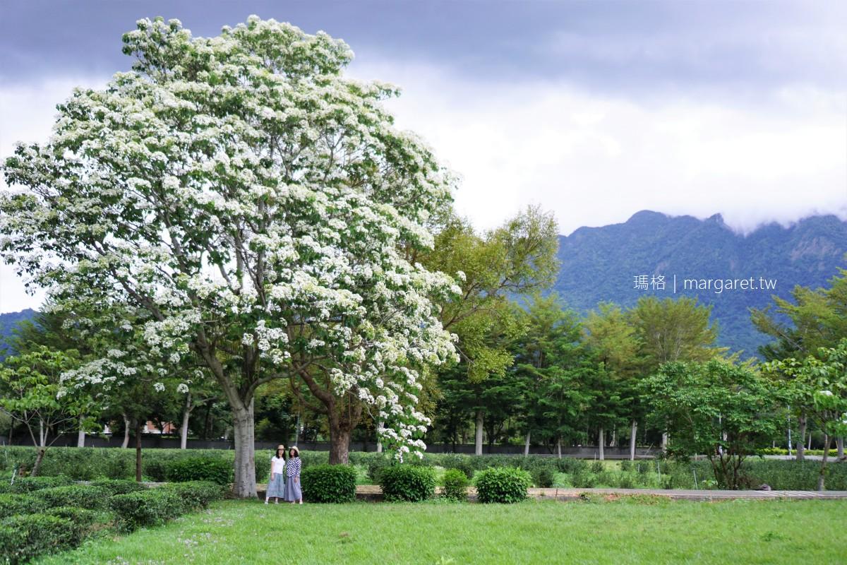 最新推播訊息:鹿野龍田桐花大道盛開中|台灣最早開花的桐花景點