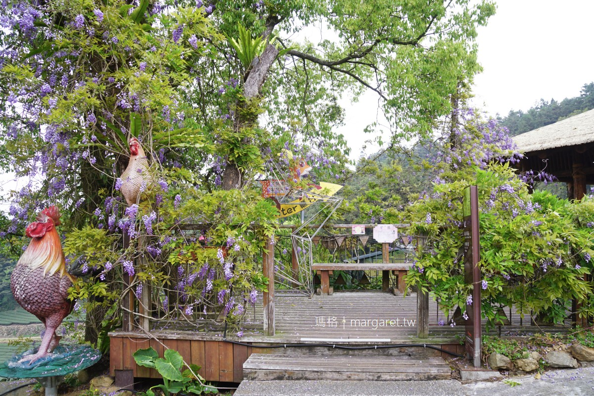 阿里山福山部落。茶園裡的紫藤花開 掌聲響起民宿 x 野牡丹咖啡莊園
