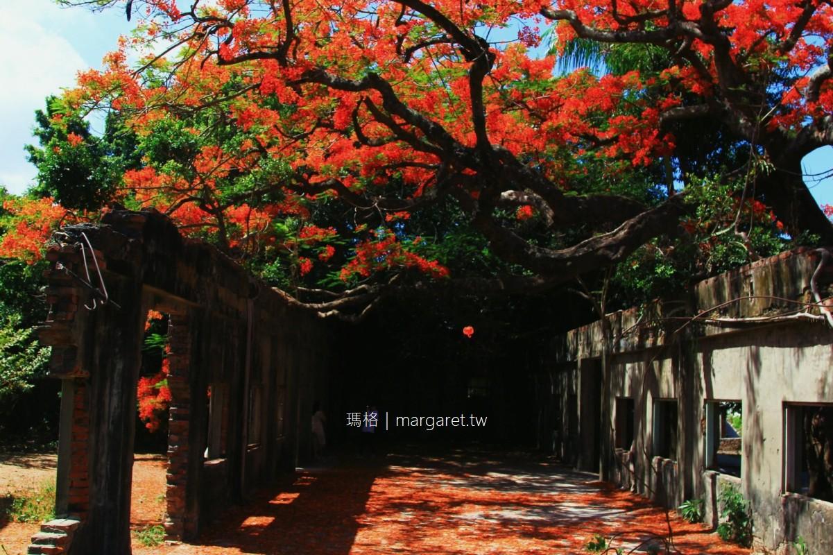 大湖番茄會社。全台最紅的鳳凰花廢墟|高雄湖內區景點