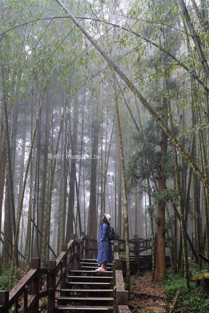 走進奮起湖迷霧森林。優美杉林木棧道|畚箕湖其實沒有湖