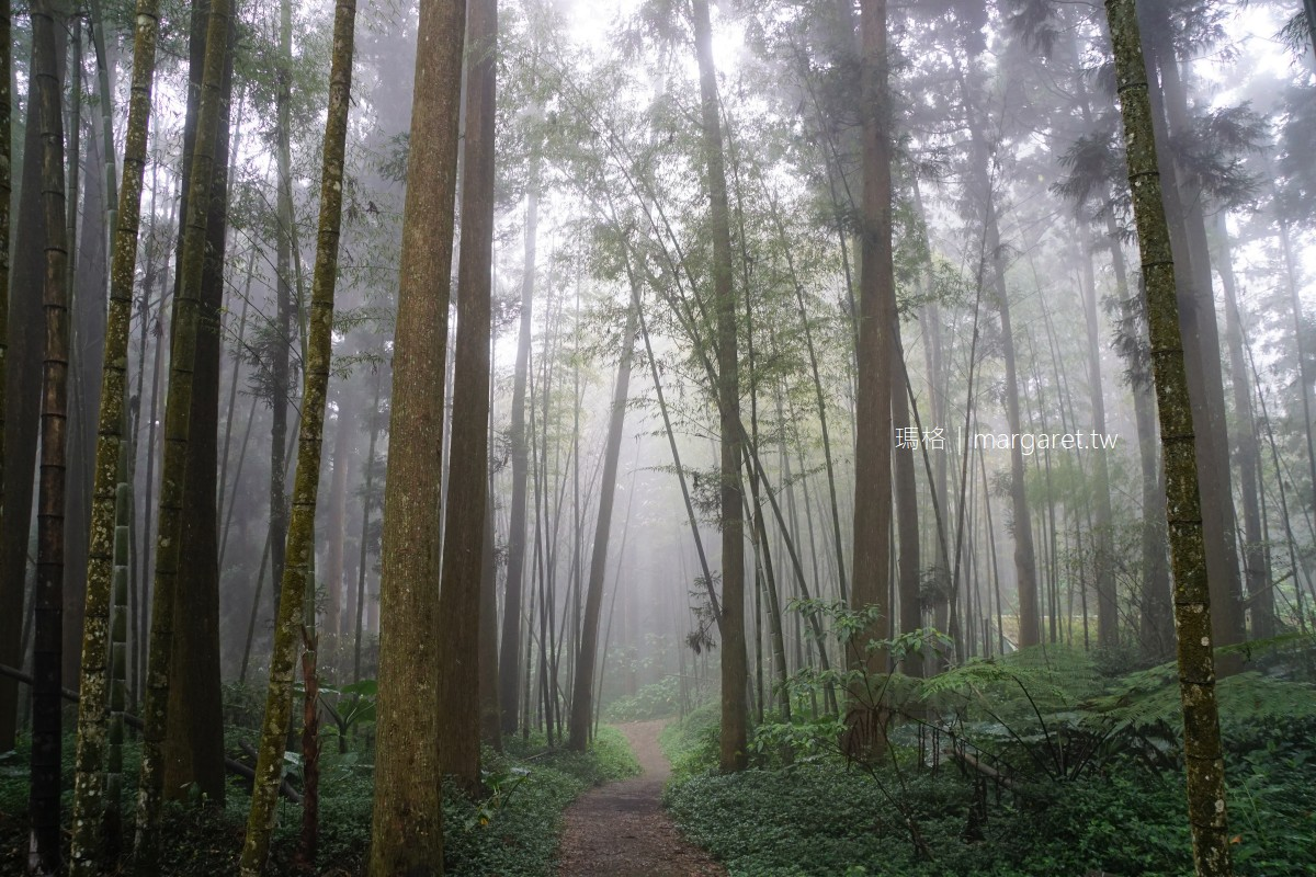 走進奮起湖迷霧森林。優美杉林木棧道|畚箕湖沒有湖知道嗎?