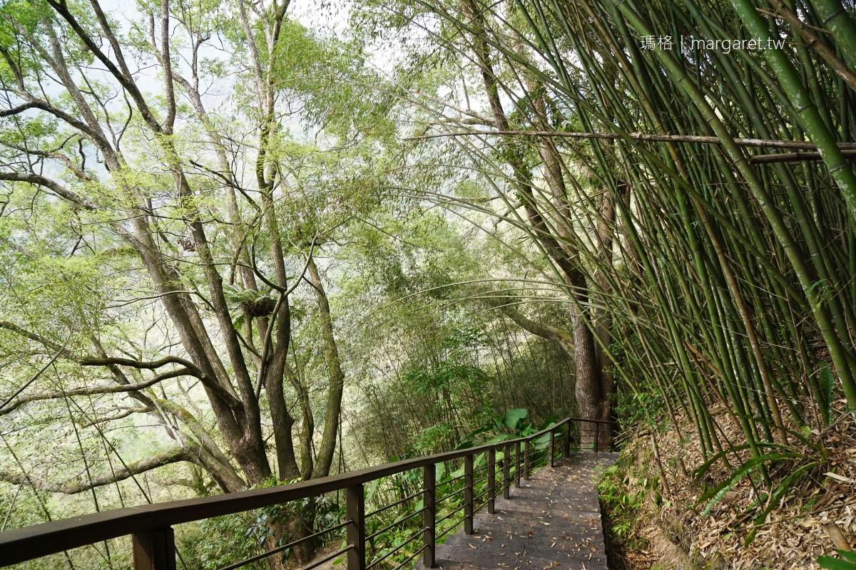 特富野步道。樟樹巨木群|串聯達邦部落、特富野部落的平緩林道