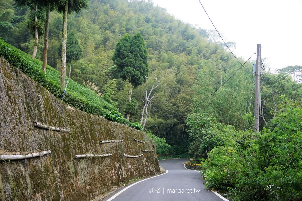 瑞里綠色隧道。梅山竹林幽徑 不須比擬京都嵐山,有自成一格的美