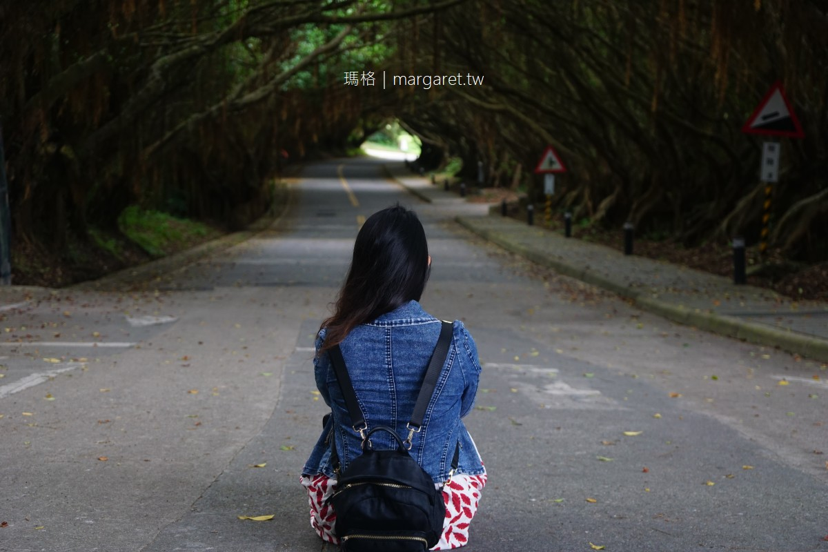 有容路。西莒林蔭隧道|榕樹鬚根形成天然垂簾