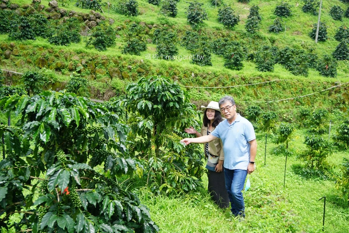 科子林咖啡莊園KOANA。嘉義瑞里|阿里山咖啡耀眼新星