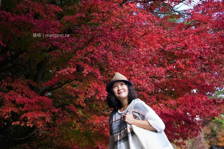 最新推播訊息:全台最佳賞紅葉景點!福壽山農場準備進入賞楓紅葉季