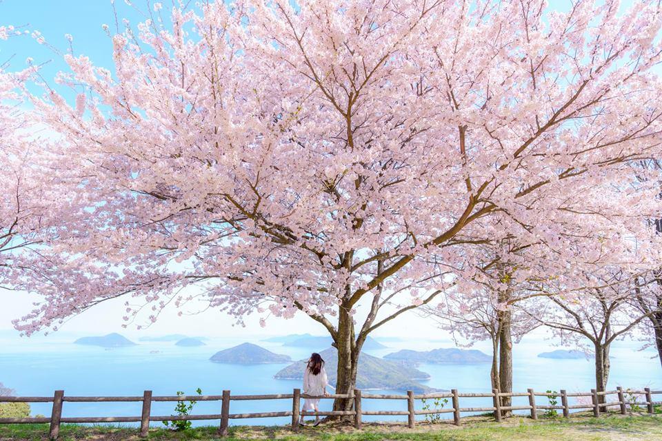 紫雲出山。瀨戶內海夢幻絕景|紐約時報推薦2019年最值得去的52個地方 @瑪格。圖寫生活