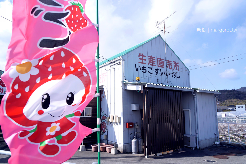 德島草莓大餐吃到飽|用鳴門牡蠣貝殼粉種出來的漩渦草莓放題|海景法式buffet午餐女孩兒最愛