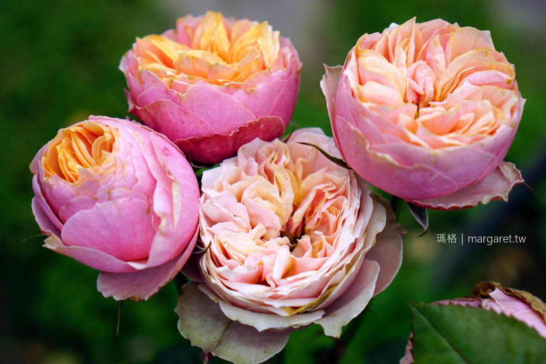 台北玫瑰園。低調浪漫的約會好地方|種植數百品種、超過2000株玫瑰 @瑪格。圖寫生活