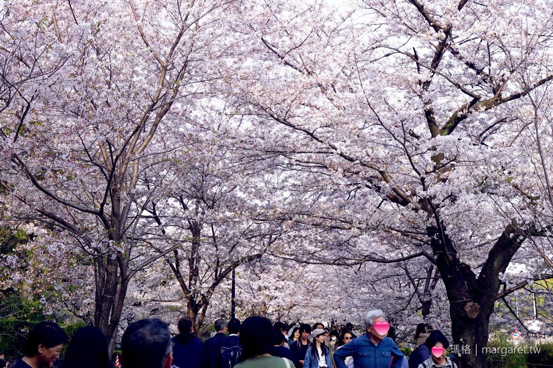 千鳥淵。東京賞櫻名所|在粉紅櫻河中浪漫漂流