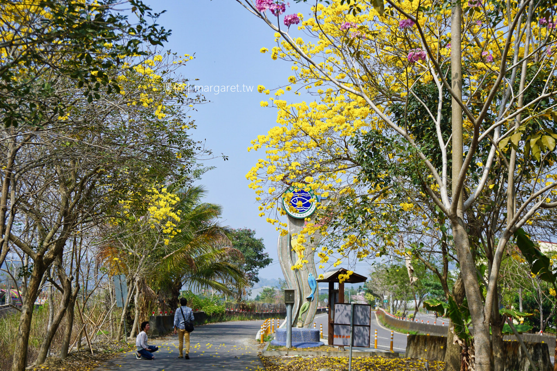 南投鹿谷私房景點。清水溝溪步道|黃花風鈴木。紫花風鈴木陸續開花