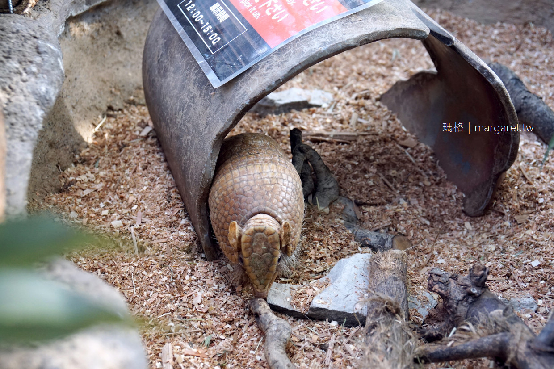 神戶動物王國。可與動物近距離接觸|超萌水豚君花瓣浴檔期。門票。交通