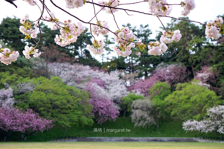 湖山池青島公園。鳥取賞櫻名所|30種櫻花妝點湖景