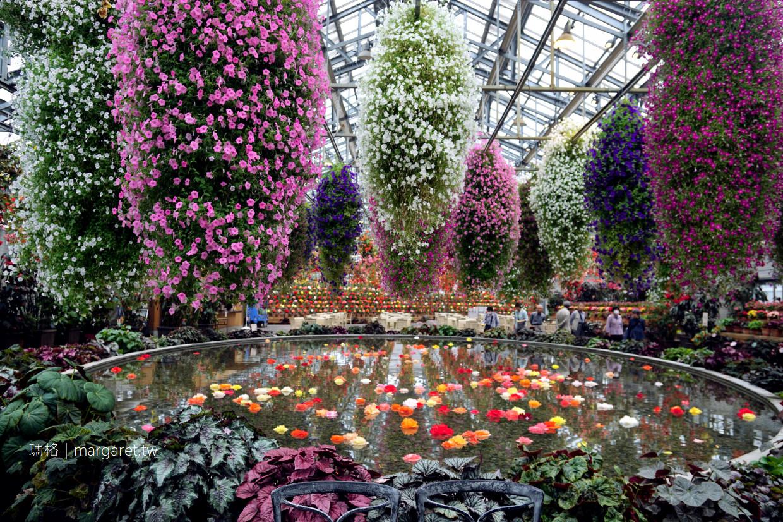 名花之里。夢幻玫瑰園|日本最大燈海,花海也迷人|從名古屋出發的交通建議(二訪更新)