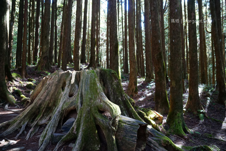阿里山森林之心。有緣才看得見|姊妹潭奇景漫遊