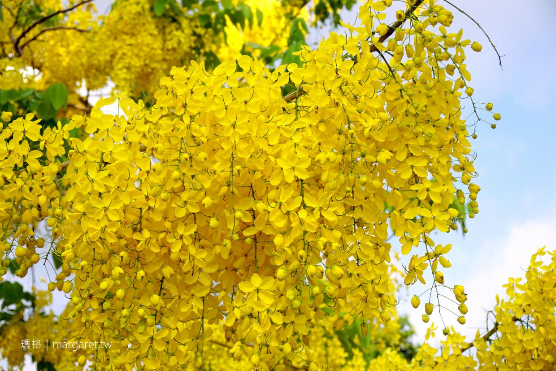 阿勃勒。嘉義3處賞花熱點|滿城盡帶黃金雨