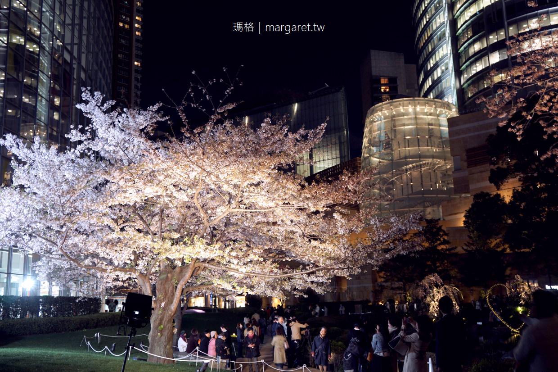 六本木之丘。毛利庭園夜櫻|櫻花、東京鐵塔、金色之心同框