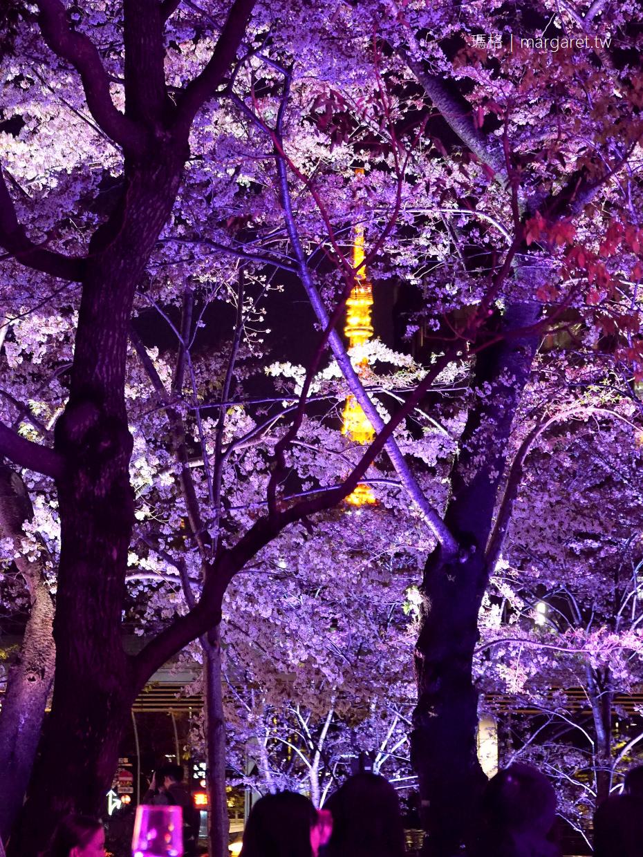 六本木夜櫻。Midtown Blossom 在櫻花樹下喝粉紅香檳。東京最時髦的賞櫻盛事 @瑪格。圖寫生活