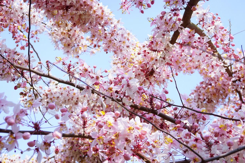 最新推播訊息:花旗木賞花景點6處。三月盛開的平地櫻花浪漫好拍