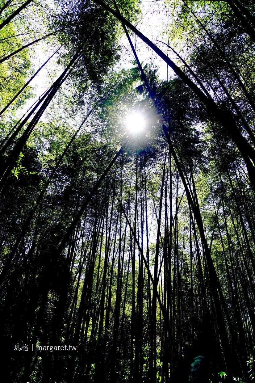 迷糊步道。阿里山賞櫻景點|樂野部落米洋溪步道。幽靜美麗的竹林(二訪更新)