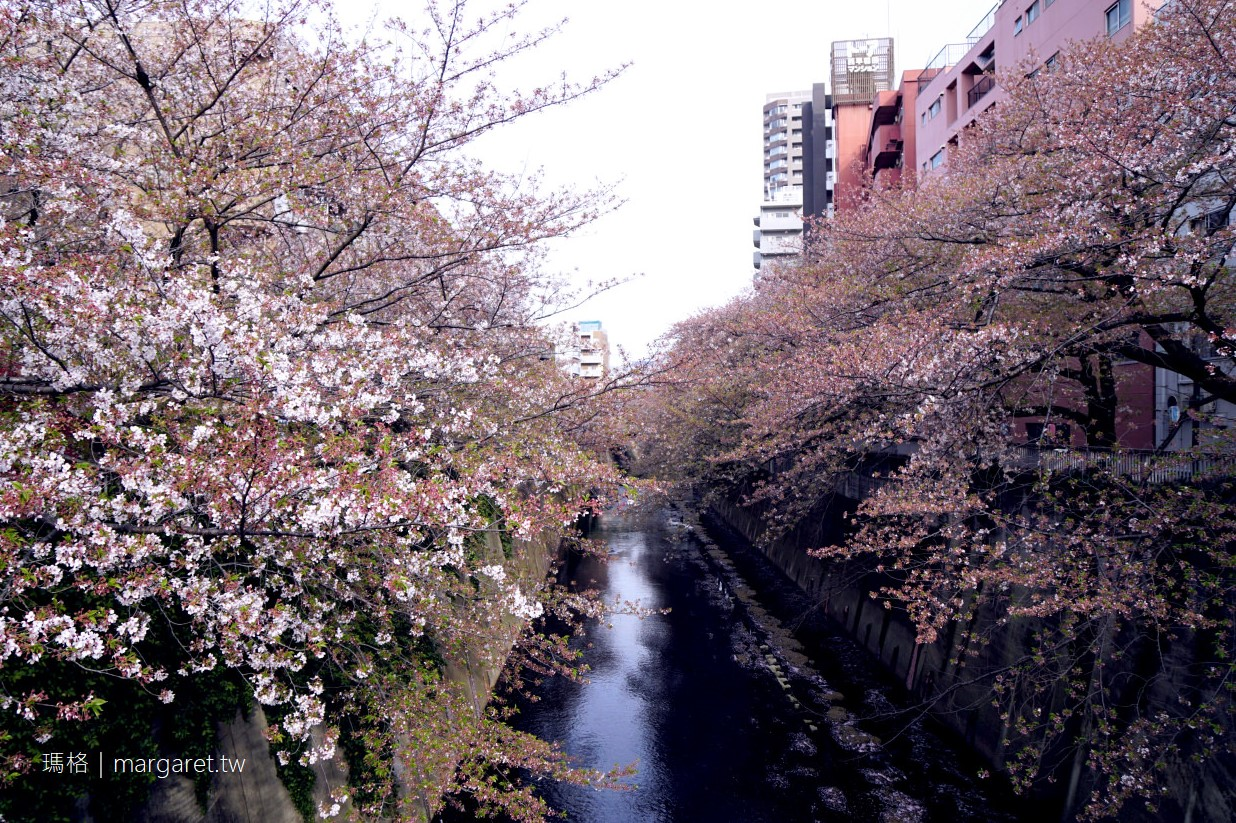 都電荒川線。東京櫻花路面電車Tokyo Sakura Tram|沿著神田川櫻並木散步道,到早稻田大學喝咖啡